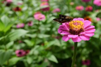 この蝶の名前が思い出せない