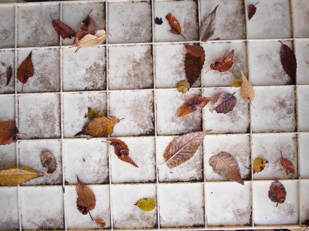 落ち葉のオセロ
