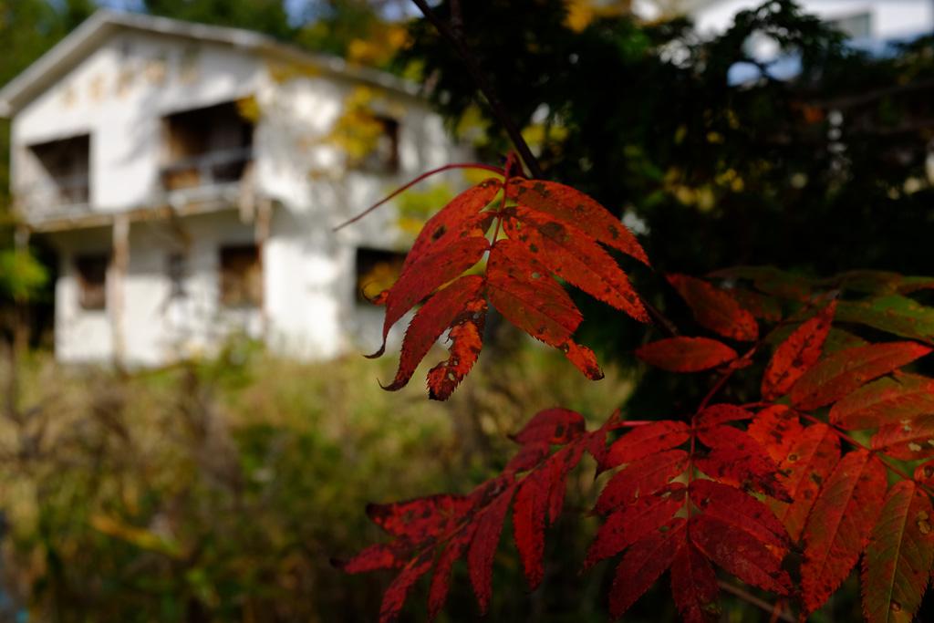 白い壁に赤い葉っぱ