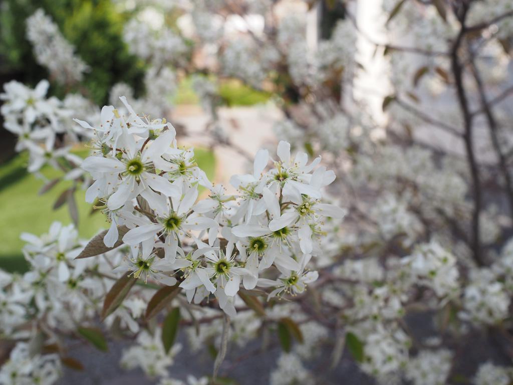 確かにベリーっぽい花