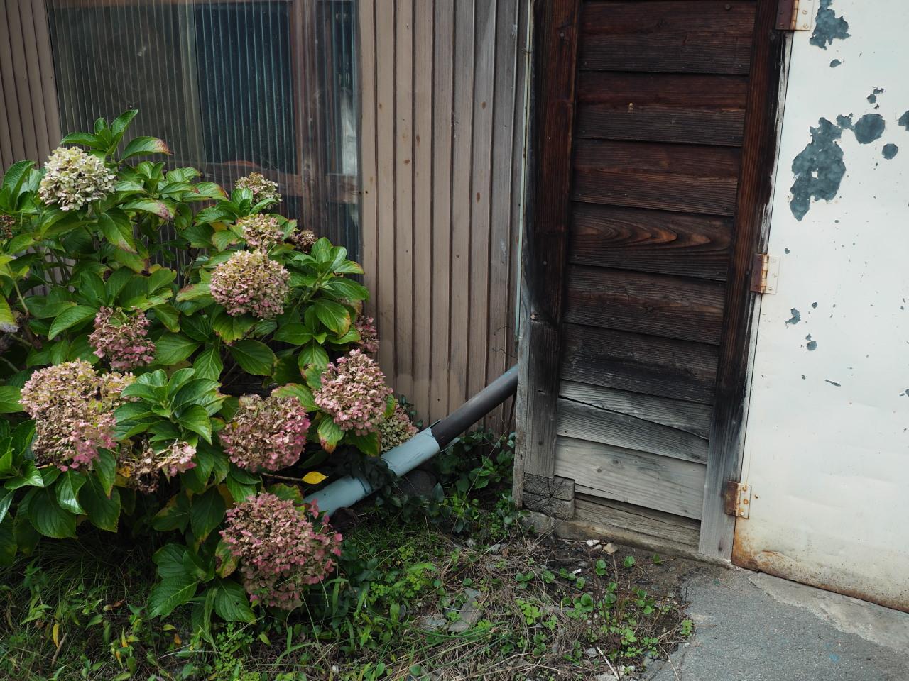 あじさいと秘密の鉄の扉