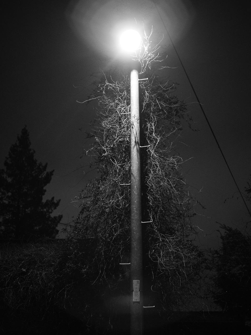 トゲトゲの木