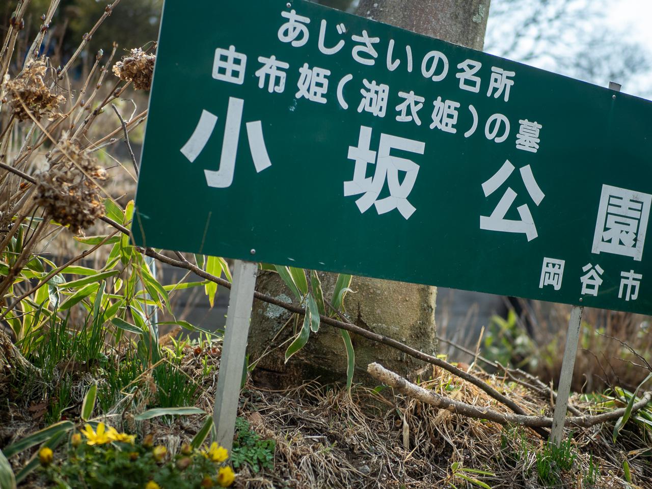 福寿草の季節です