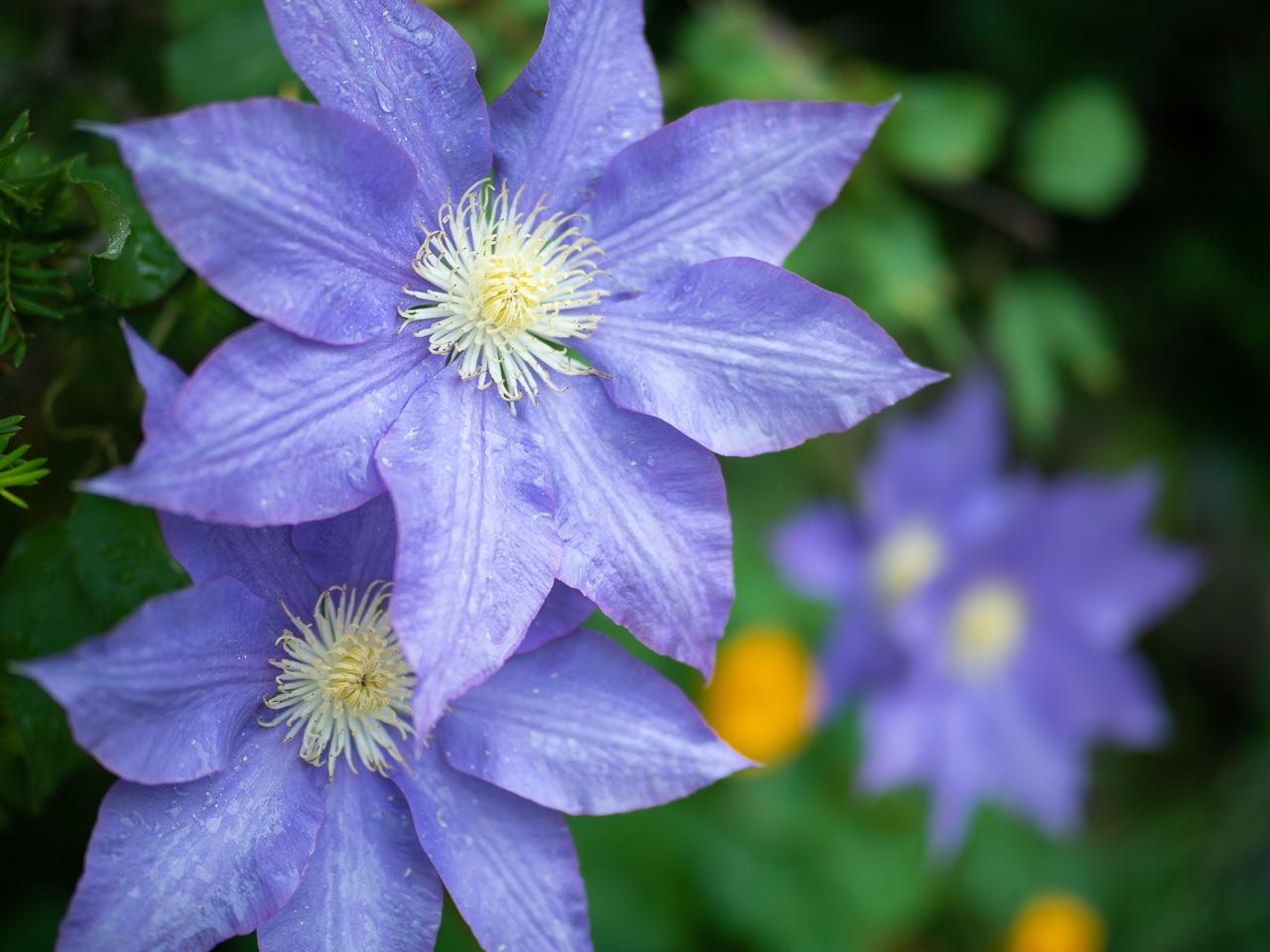 花の写真を撮る心の余裕